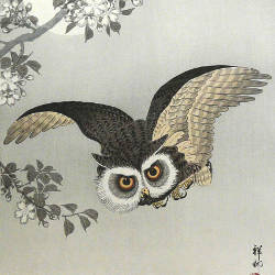 Japanese Woodblock Owl Logo